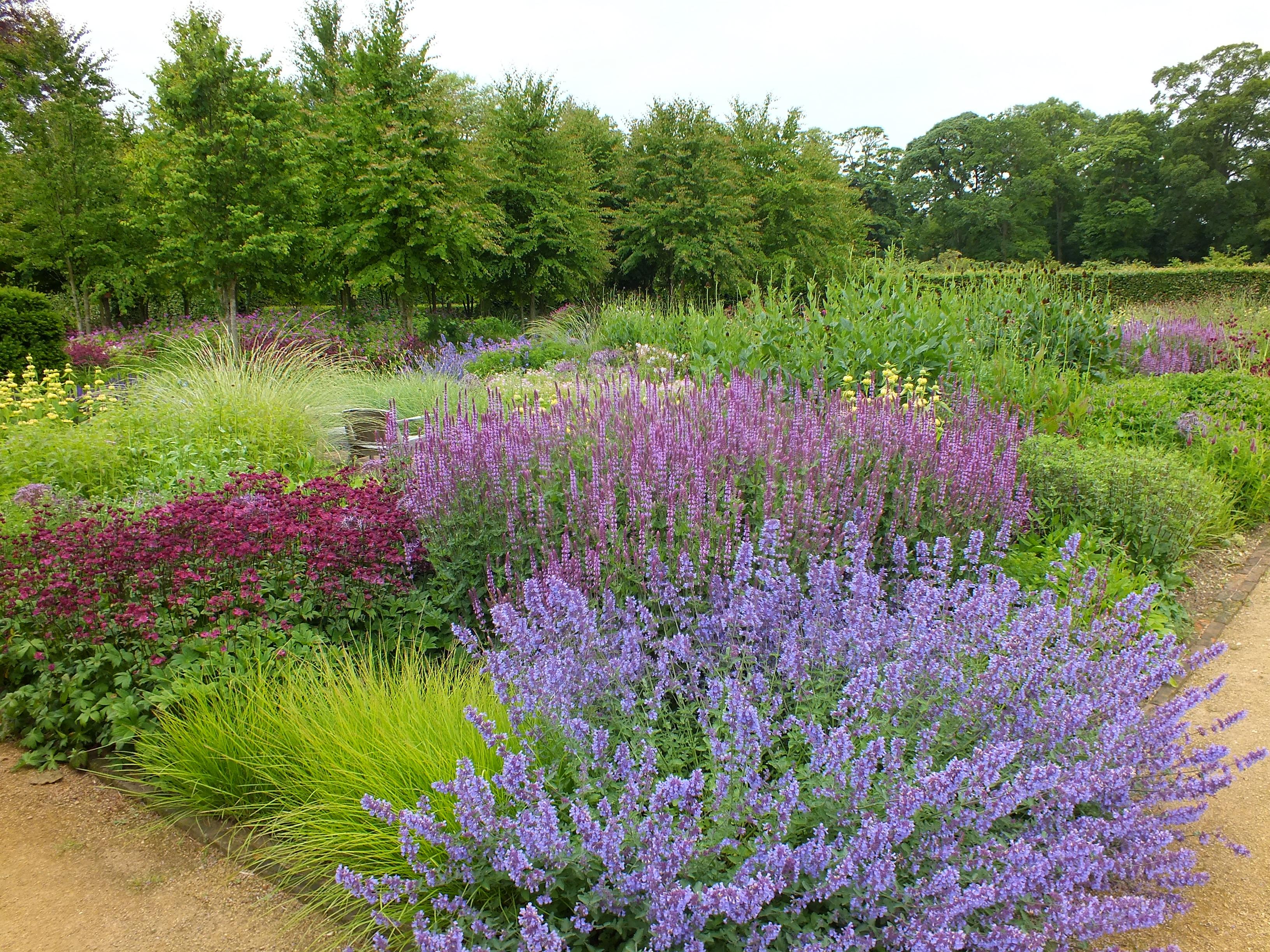 Scampston walled garden the teddington gardener for Piet oudolf plant list