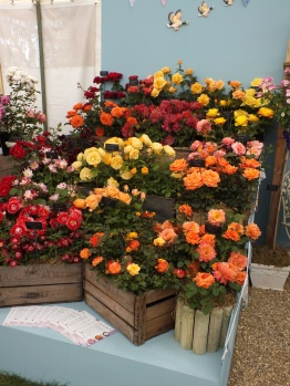 Eastcroft Roses