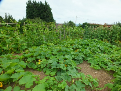 Gourds, beans and courgettes