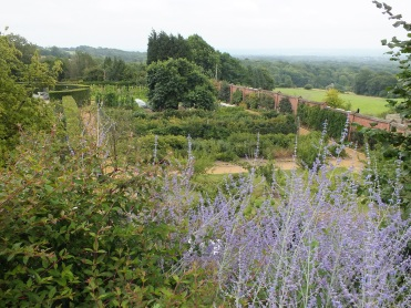 Looking across the soft fruit garden