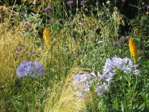 Gauzy haze of grasses and Verbena bonariensis