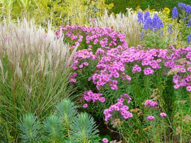 Late summer colour - grasses, asters and aconitum