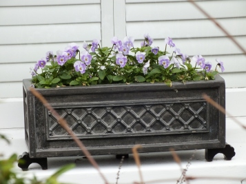 Window box, violas