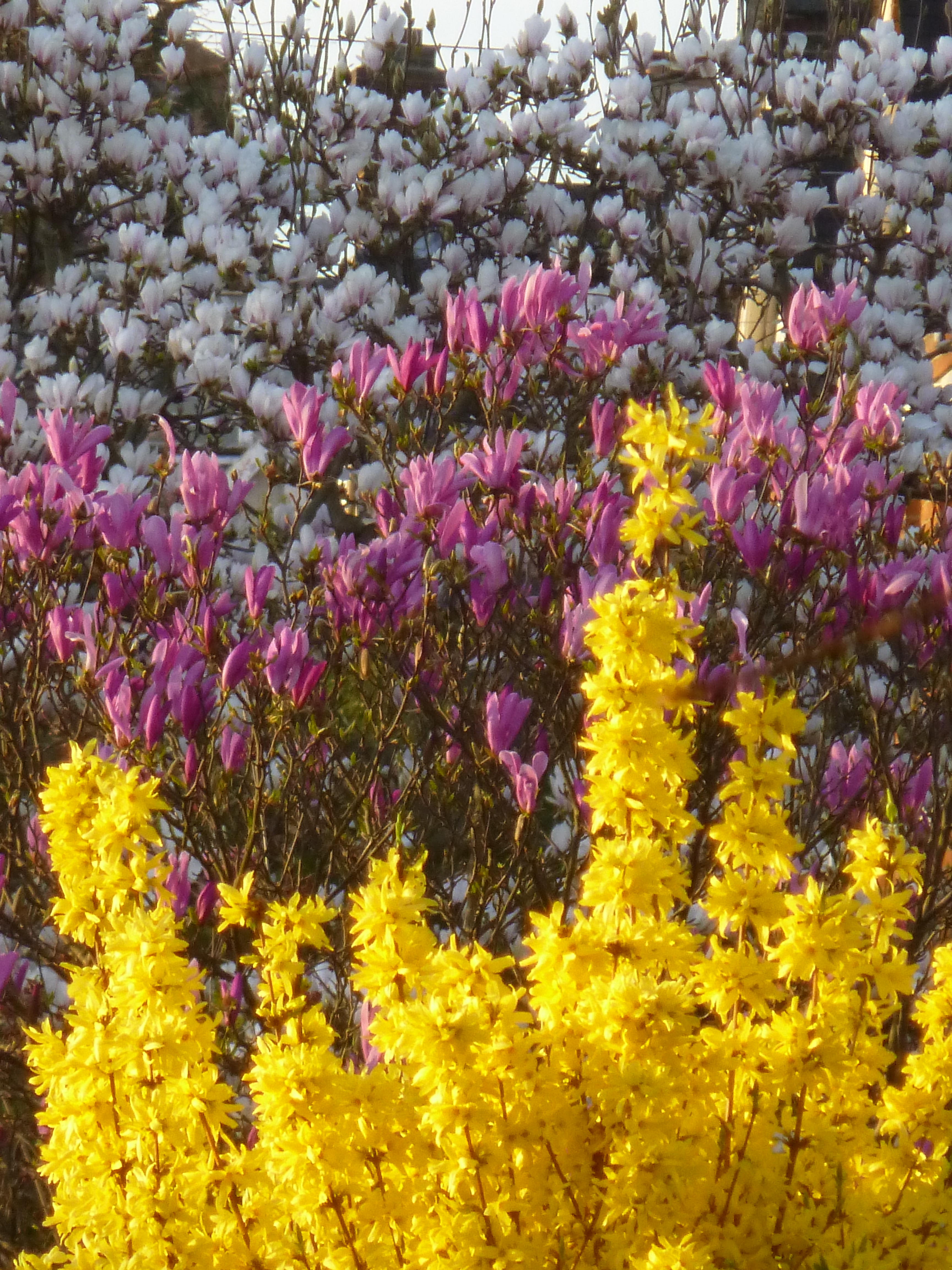 Spring Is Springing The Right Plants At The Right Time