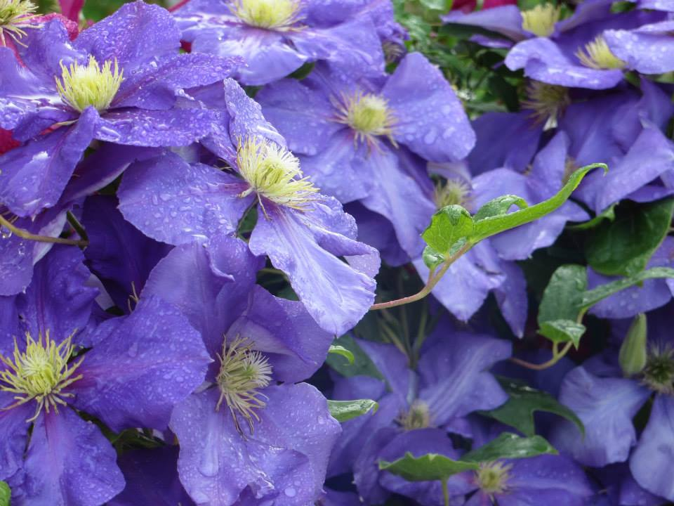 climbing plants essay News, email and search are just the beginning discover more every day find your yodel.