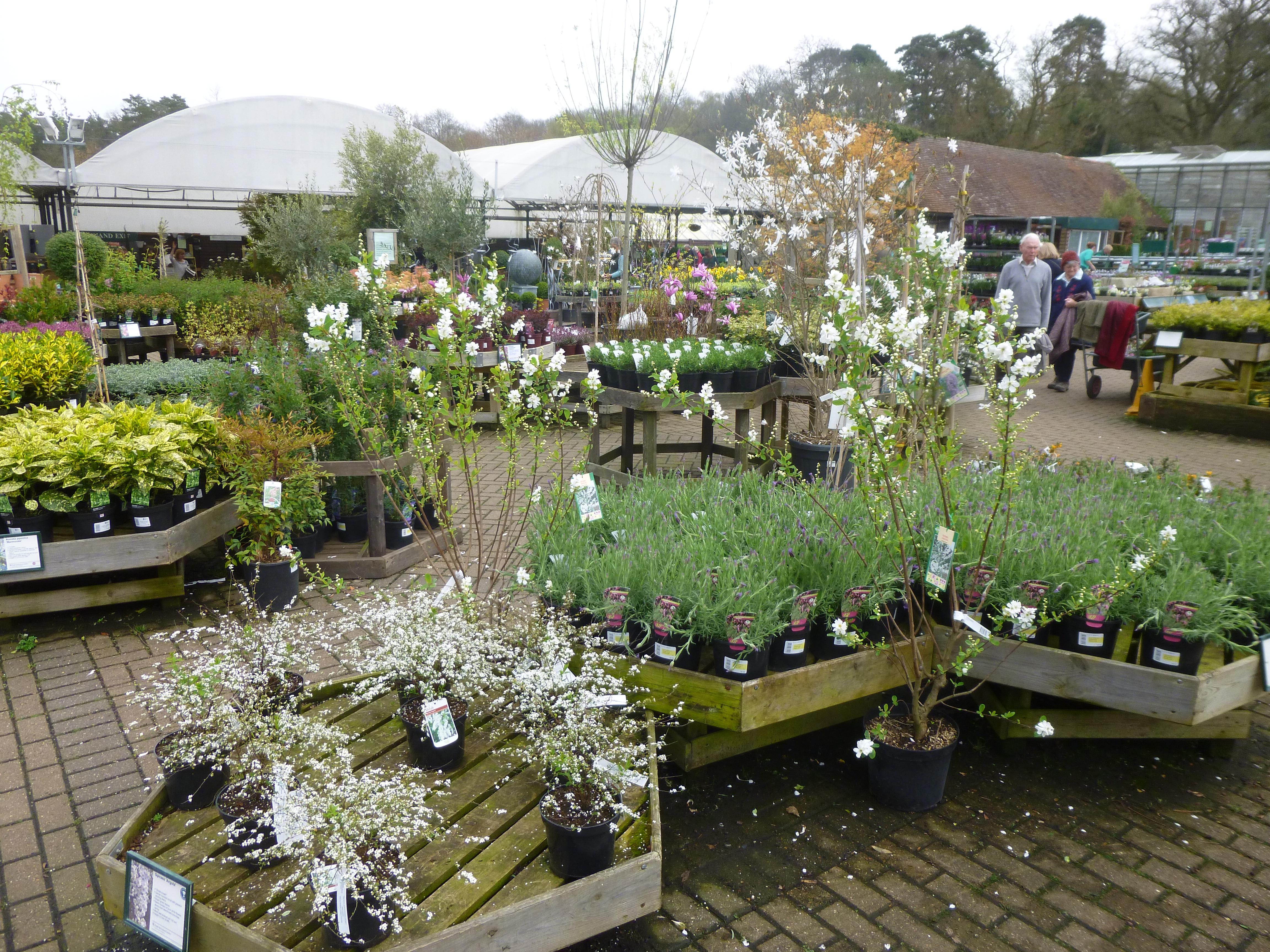 Garden Centre: Garden Centre Geek – RHS Wisley Plant Centre