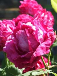 Vermillion, pink and crimson - Souvenir de Jeanne Balandreau