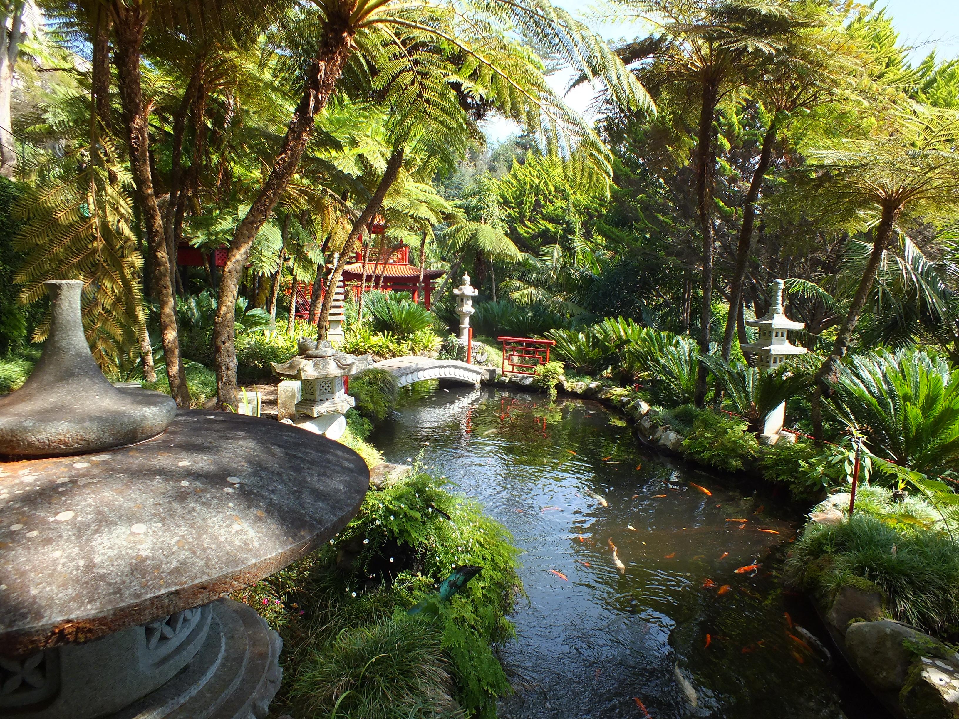 Teddington Gardener Goes International Madeira Explored
