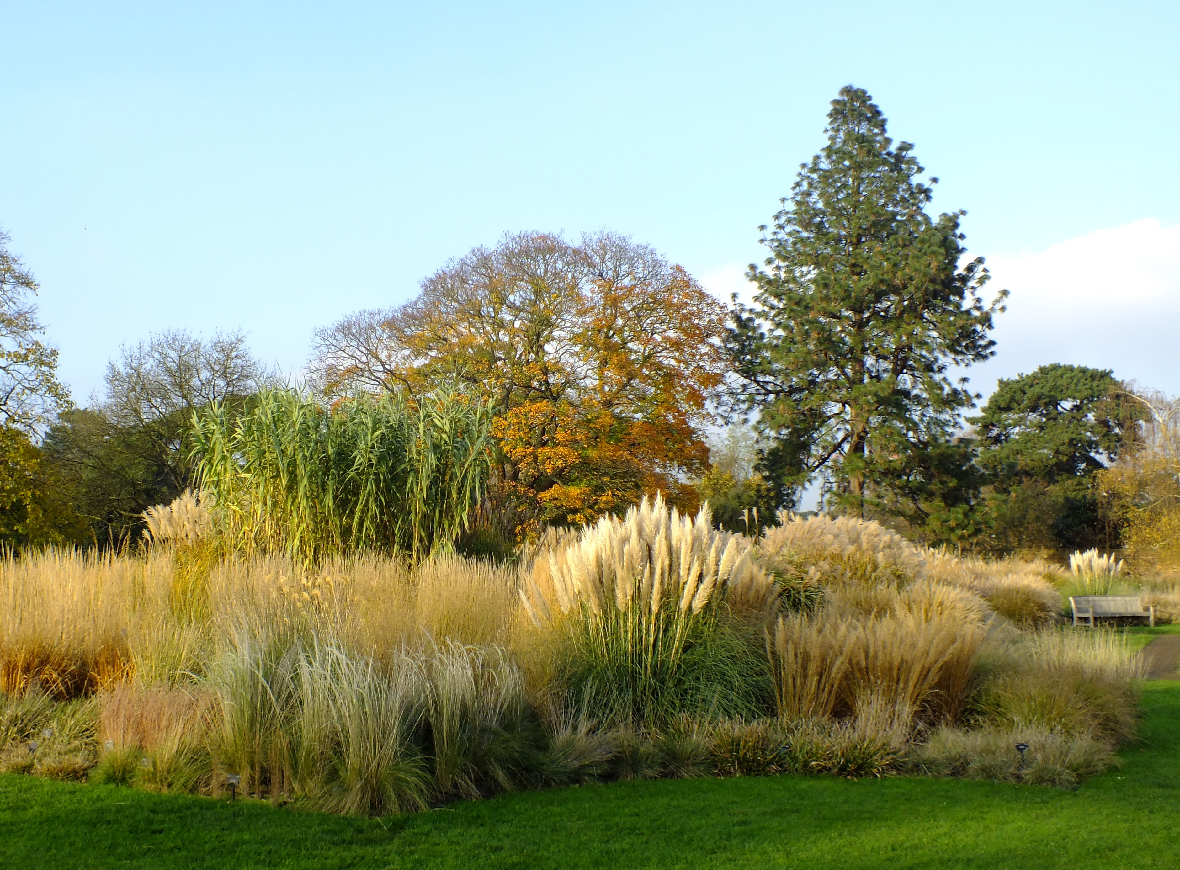Golden brown texture like sun the grass borders at kew for Garden grass