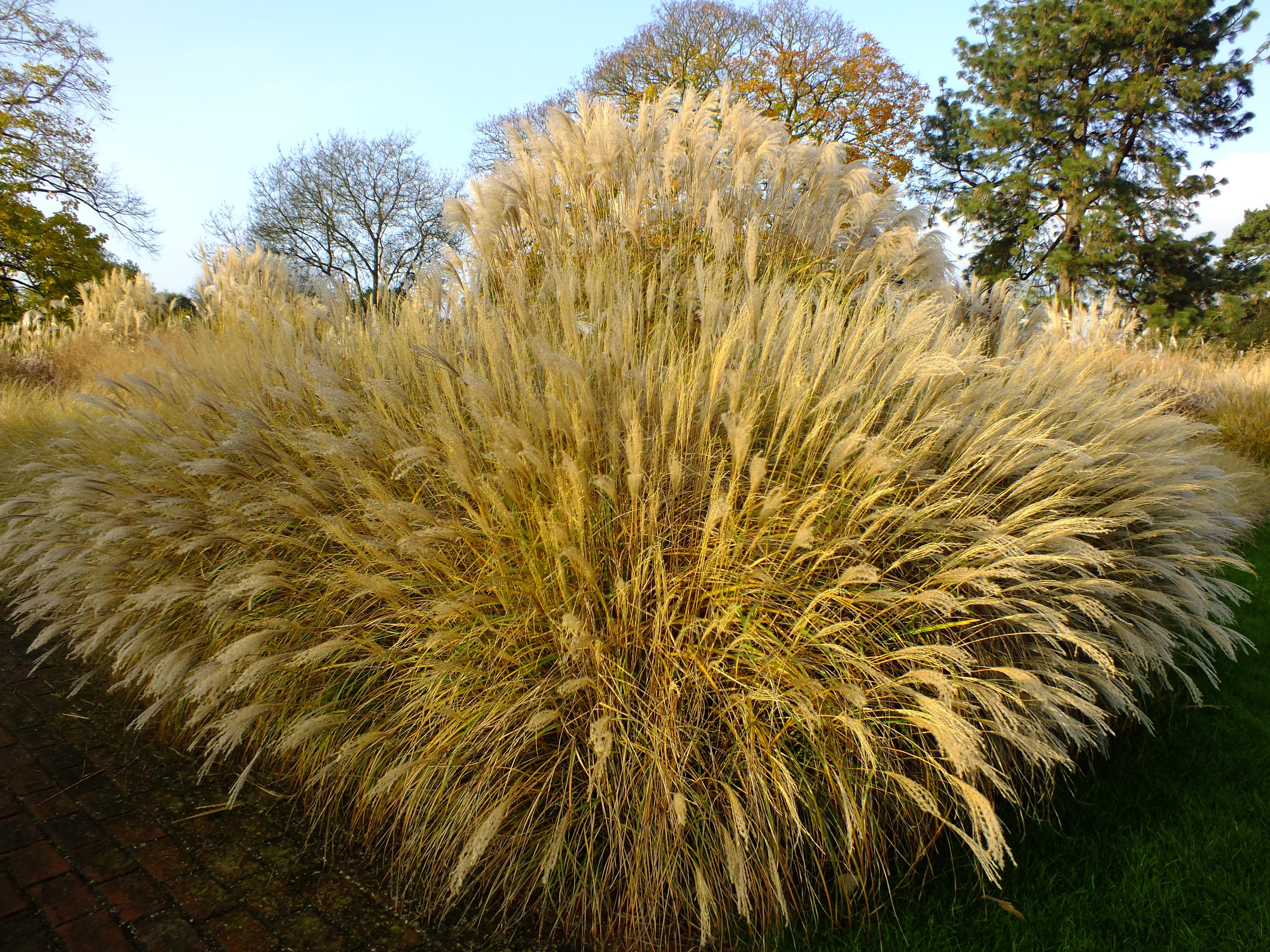 Golden brown, texture like sun – the Grass Borders at Kew Gardens ...