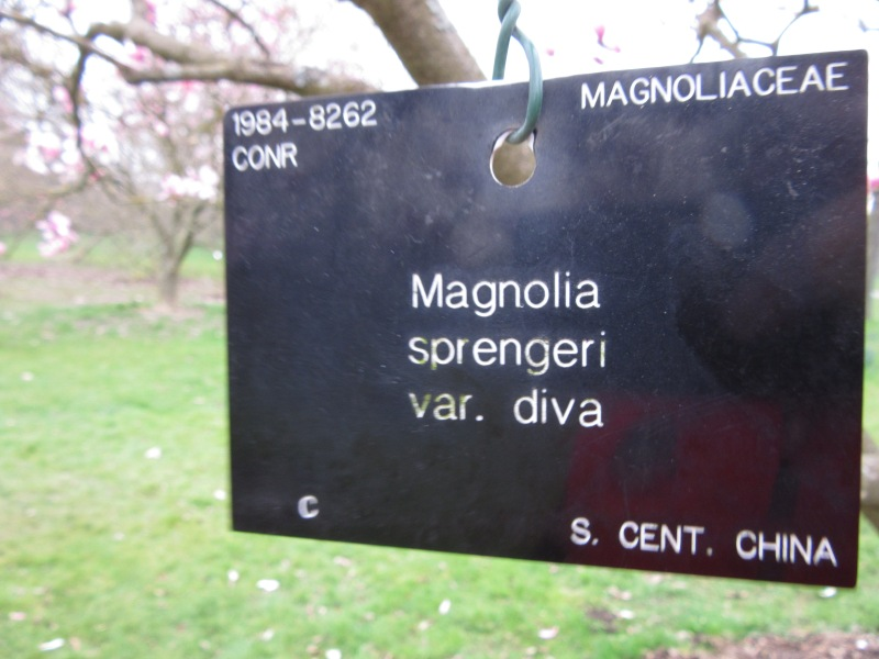 IMG_8972
