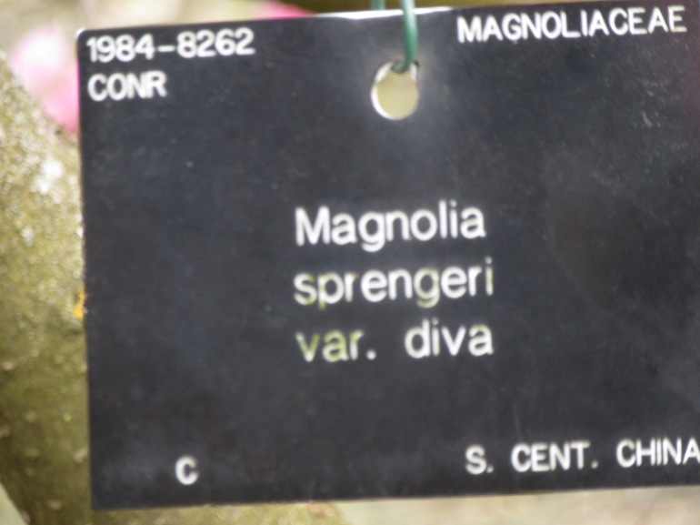 IMG_9236