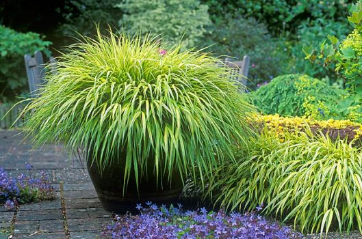 The shady garden in summer and into autumn beginning an for Ornamental grass with yellow flowers