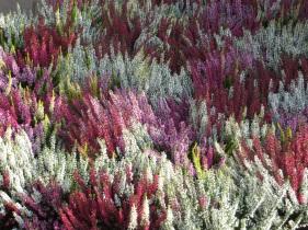 heathers natural multicoloured