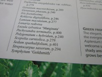 IMG_7382
