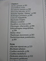 IMG_7386
