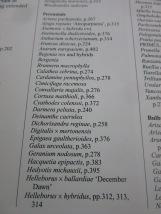 IMG_7388