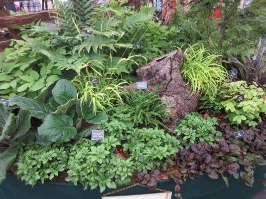 Mixed Gardeners's World Live