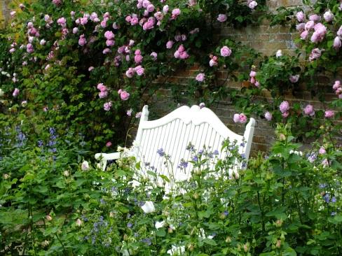roses mottisfont mixed 2