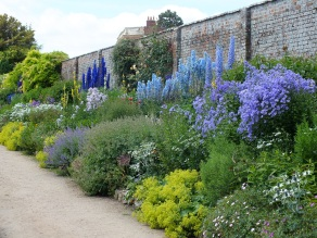waterperry gardens blue delphiniums
