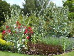 waterperry gardens red rose silver cynara is it