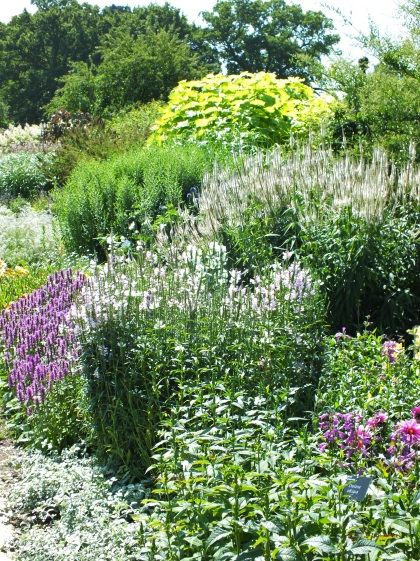 wisley cool border