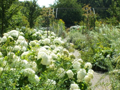 wisley hydrangea annabelle white borders