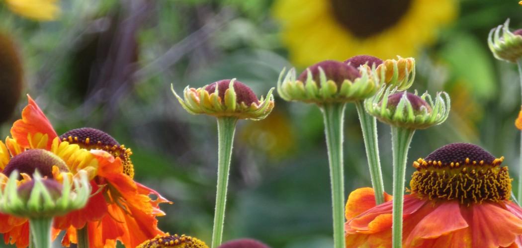 The Teddington Gardener