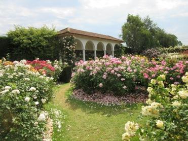 2 Acres Of Paradise David Austin Roses At Their Albrighton Nursery Gardens The Best Display
