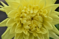 Dahlia Clearview Sundance
