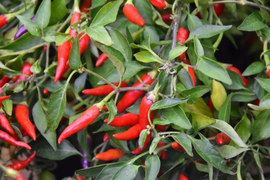 Chilli Basket of Fire