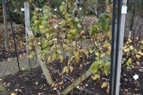 Raspberry Glen Clova