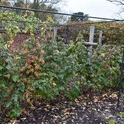 Raspberry Autumn Bliss