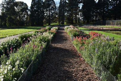 Trial Fields at RHS Wisley