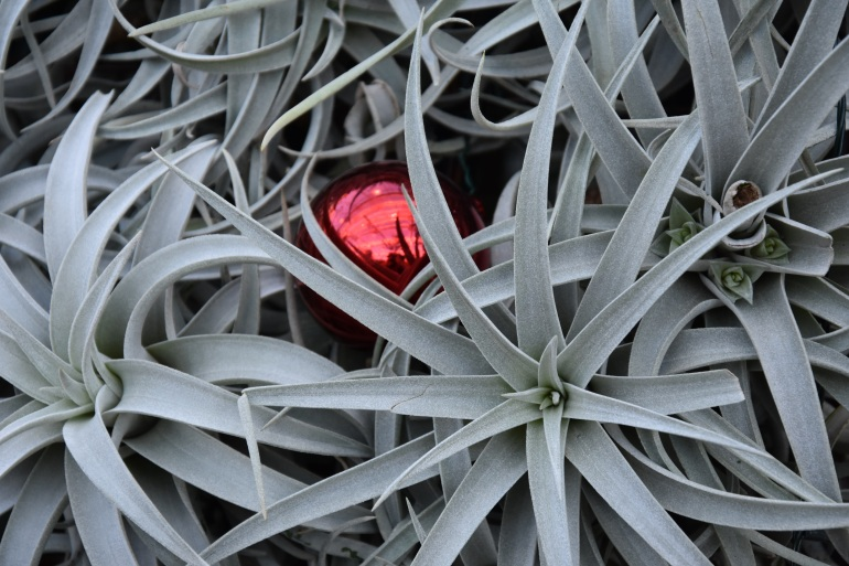 08succulenttree