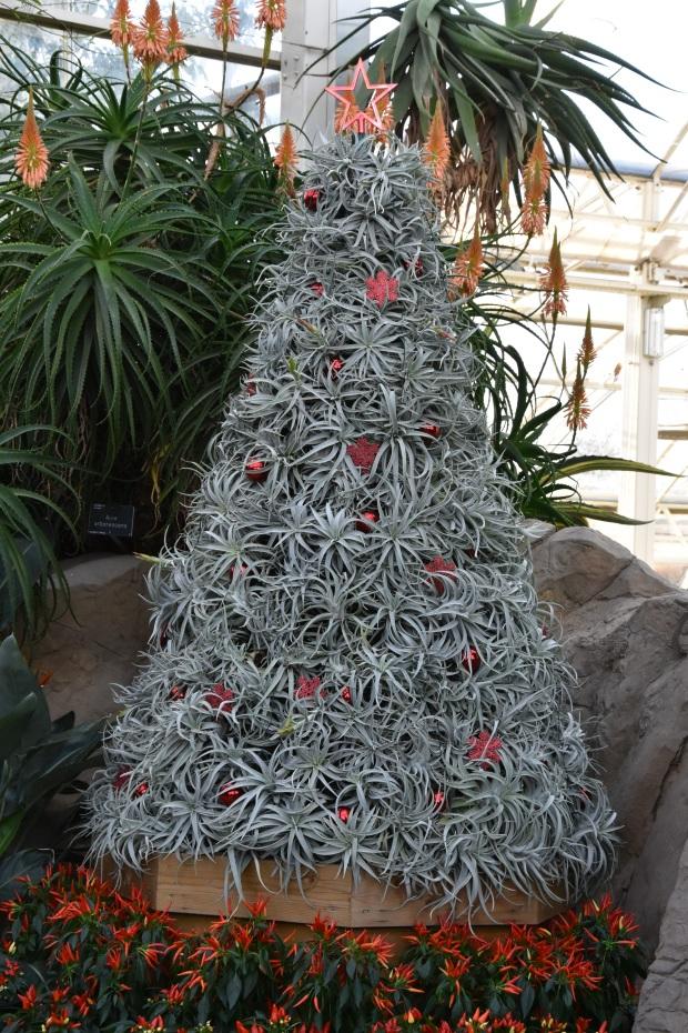 08succulenttree2