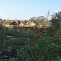 Across the Rose Garden