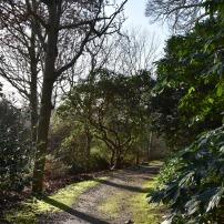 Woodland path on Battleston Hill