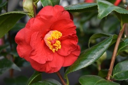 Camellia Dr Burnside