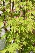 Acer Going Green