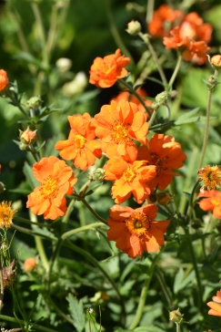 Geum Princess Juliana