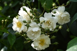 Rambling Rector