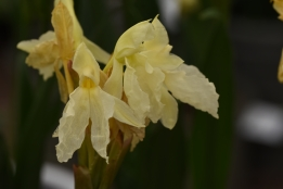 Roscoea Jeffrey Thomas