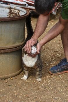 Thug, the Petersham Cat