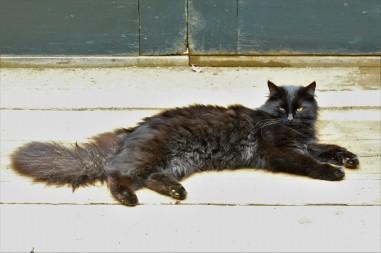Fino, Alphonse or Fluffy ...
