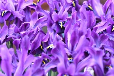 Iris George
