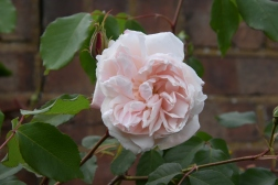 Rosa Louisa Stone