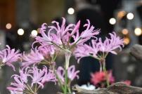Springbank Seedlings
