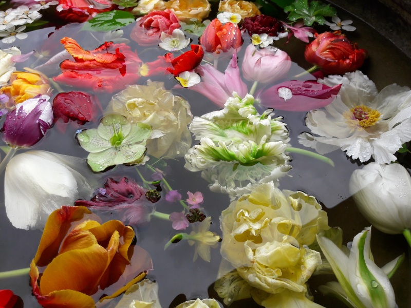 A spring soup spring cutting garden flowers floating the the breeze moves them around in a floral ballet of brownian motion and it is a real delight some float some sink gently and it is quite distracting mightylinksfo
