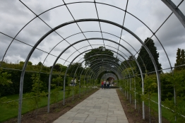 The newly completed Wisteria Walk